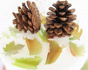 sugar pine cones medium brown set of 2