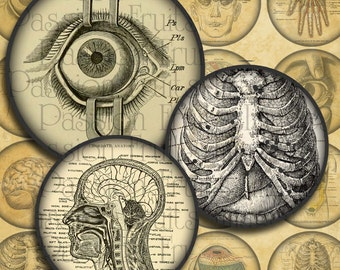 Antique Anatomical Drawings Large Rounds for 1.5 Inch Buttons Digital Collage Sheet-- Instant Download