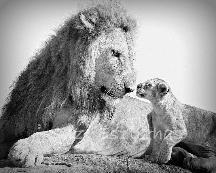 Safari Baby Animals Set Of 4 Black Amp White By Babyanimalprints