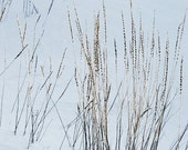 Winter Grass Snow Wheat Wild Grass Fine Art Photography