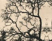 etching, Oak Mandala, original modern print