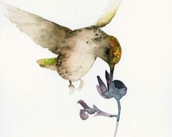 Watercolor Artwork Hummingbird Feeding on a Flower