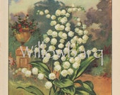 Lily of the Valley. 1926 country cottage garden old fashioned botanical color lithograph print