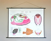 Vintage 1960s Double-Sided School Chart: Moss and a Clam