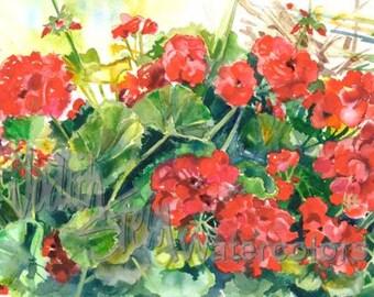 "Red, Crimson, Geranium Garden Blossoms, Flower Watercolor Painting Giclee Print Wall Art Home Decor ""Joyful Geraniums"" by Stein Watercolors"
