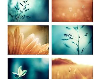 Teal Orange Photo Set, Six Photographs, aqua blue turquoise brown nature wall art autumn fall photography 6 print set botanical artwork 8x10