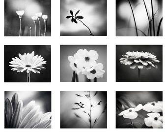 Black and White Photo Set, 9 Photographs, nature flowers photography nine dark grey gray botanical gallery print set modern wall art set