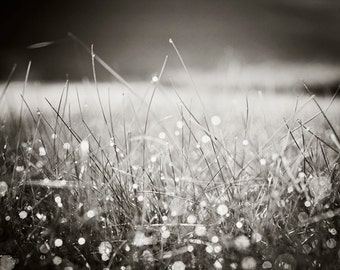 "Black and White Sparkle Photography - sparkly dew modern bokeh nature wall print dark grass photo grey gray, 8x10 Photograph, ""Morning Dew"""
