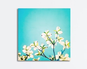 """Aqua Flower Canvas Photography - blue white dogwood floral blossoms spring branches photo gallery wall art colorful print, """"Skies of Blue"""""""