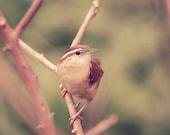 Bird Photograph, tree, winter, branches, nature print, pastel, woodland, forest, bird print, animal, fine art photography, 8x10 print