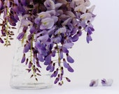 Wisteria in a vase - home decor - lilac, purple flower photo, still life photography - flower blooms - alekaki