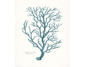 Coastal Decor Vintage Branch Coral Giclee Art Print 8x10 tide pool