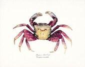 Coastal Decor Root Crab Natural History Wall Decor Art Print - red