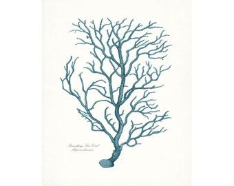 Coastal Decor Vintage Branch Coral Giclee Art Print 8x10 tide pool