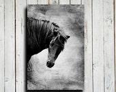 Black Horse - Horse photography - Horse art - Horse decor - Black and White Horse - Black Horse photography - Animal photography