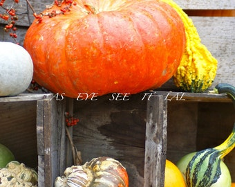 PUMPKINS  and Gourds at a farm stand display 2  5X7  Photo Greeting card 5x7