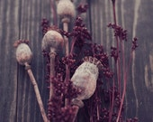 Seeds -  Rustic Winter Poppy Capsules Photography Print
