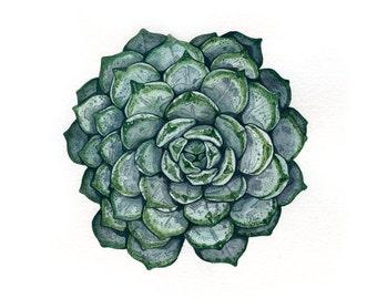 Succulent | Watercolor | Archival Print
