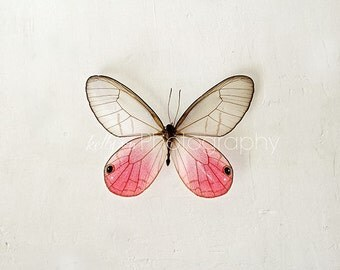 Butterfly Photography- Still Life Photo, Pink Glasswing Butterfly, Nursery Decor, Pink Grey White, Insect Art, Feminine Decor, Butterfly Art