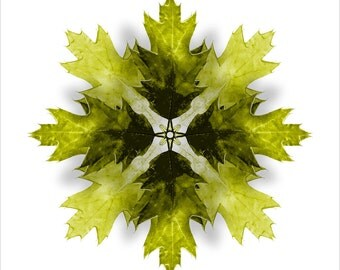 Kaleidoscope Oak Tree Leaf in Yellow - Green, Giclee Print. Great for Autumn / Fall Seasonal Decorating, Thanksgiving, Halloween.