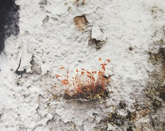 Small weeds on decayed wall. Queens, NY