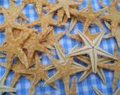 small mini tiny tan starfish BEACH NAUTICAL DECOR weddings crafts