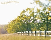 Summer landscape fine art photo dreamy photography whimsical spring fence sunset green gold yellow large wall art home decor