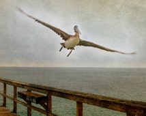 Pelican Photography, Bird Photo, Rustic Ocean Picture, Gray and Brown Art, Sea Photograph, Nature Artwork
