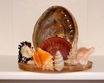 Seashell Grotto Vintage 70s Shell Souvenir Clip for Light Lamp Nightlight repurpose craft project kitsch nautical beach desk office kitchen