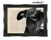 Almond Eyes Original Pit Bull Love Print on an Unframed Upcycled Bookpage