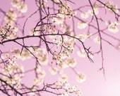 Flower Photography - fine art photo flowering white crabapple tree pink sky photograph nursery kids room decor wall art home decor