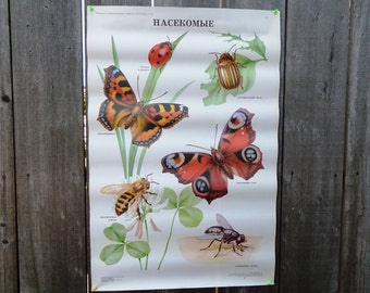 Large Insects School Poster 1991