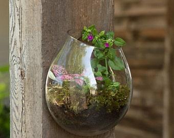 FREE SHIPPING Wall Terrarium, Hanging Terrarium, Succulent Garden, Hand Blown  Glass Terrarium, Part 79