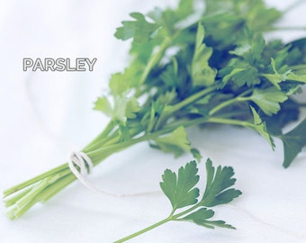 Food Photography - Kitchen Art - Herb Photograph - Parsley - Dining Room Decor - Fine Art Photography Print - Green White Home Decor
