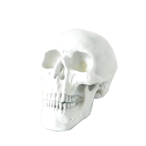Modern White Skull Home Decor Oddities Skulls Macabre By