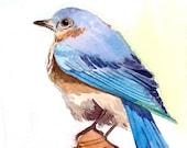 ACEO Limited Edition 4/25 - Bird on roof, Bird art print of an Original ACEO Watercolor, Bluebird on a birdhouse, Gift idea for bird lovers