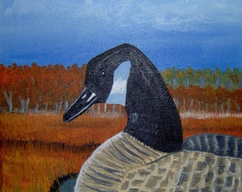 Canada Goose Sitting Pretty