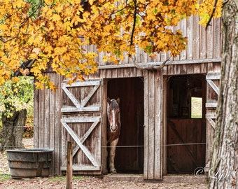 Barn Pony -  Nature photography, landscape photography, fall, autumn, horse, fine art print, leaves, New England, new hamsphire