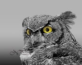 Great Horned Owl Close Up Matted Picture Art Print A515 Black White Grey Yellow