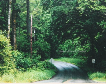 5 x 7 matted photo, forest path, Pacific Northwest