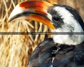 "Bird ""Big Beak"" Fine Art Photograph"