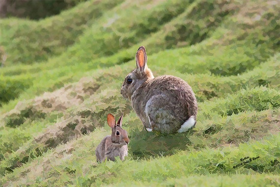 the background of the common mammal the rabbit Common name(s): european rabbit [english] curator of north american mammals and chief of mammal section european rabbit [english.