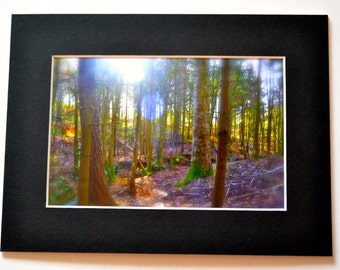 "Mounted Original Photograph - 8 x 6"" - Magical Faery Woodland"