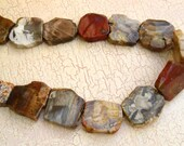 Petrified Wood Slab Beads Petrify Unusual Freeform Focal Slabs Drilled Stone Polished Natural Colors Wholesale Jewelry Supply CrazyCoolStuff