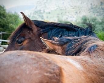 Horse art, equine art, horse photography, equine decor, rustic wall art, brown, chestnut