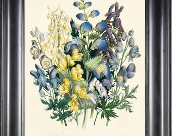 BOTANICAL PRINT Loudon Flower  Botanical Art Print 65 Beautiful Blue Antique Delphinium Wildlowers Garden