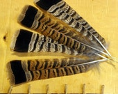 12 PARTRIDGE BIRD FEATHERS - Real Grouse Tail Crafting Feathers - Millinery, Tribal, Taxidermy, Scrapbooking, Native American, Fly Tying