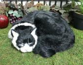 Black Sleeping Cat Adorable Furry Animal Taxidermy Figurine Decor Kitty