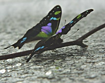 Photography Prop, Butterfly, Black, Purple, Green, & Blue