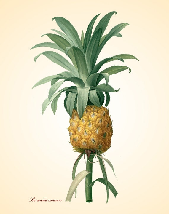 Items similar to vintage pineapple art print antique for Pineapple outdoor decor
